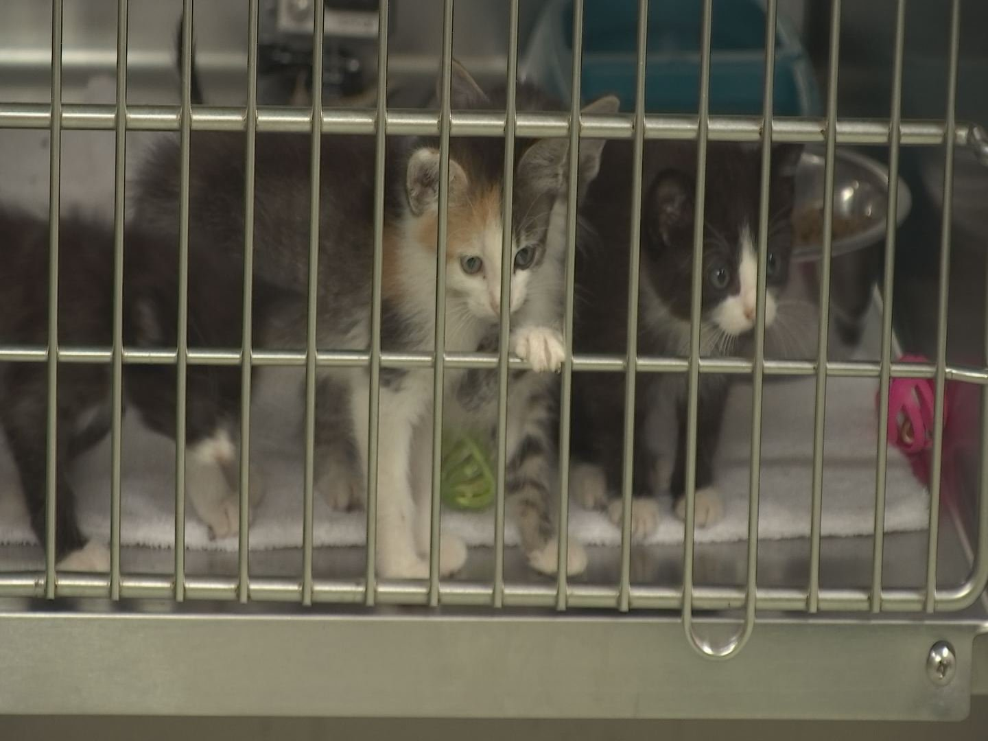 These kittens greeted us at the Calloway County Animal Shelter as they waited for a good home!