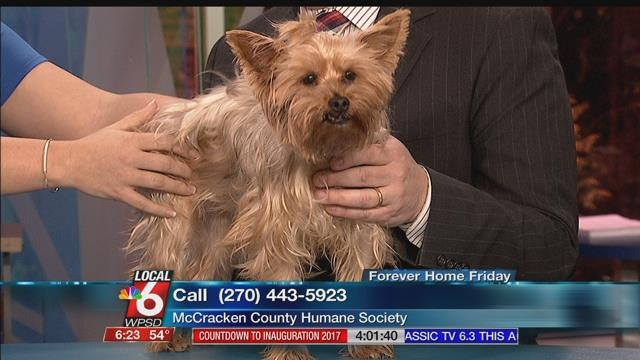 Forever Home Friday - Goldie - WPSD Local 6: Your news ...