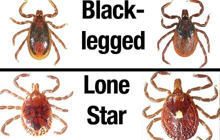 These are some kind of ticks in the local 6 area that you should look out for.