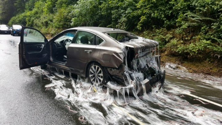 Crash leaves OR road covered with slime, eels