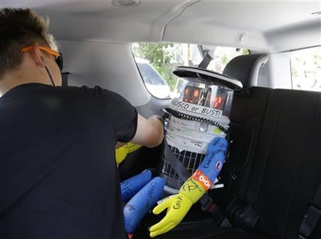 German tourist Eric Vogel straps a seatbelt around HitchBOT, a hitchhiking robot, as Vogel and his traveling companions give hitchBot its first ride Friday, July 17, 2015, in Marblehead, Mass.  (AP photo)