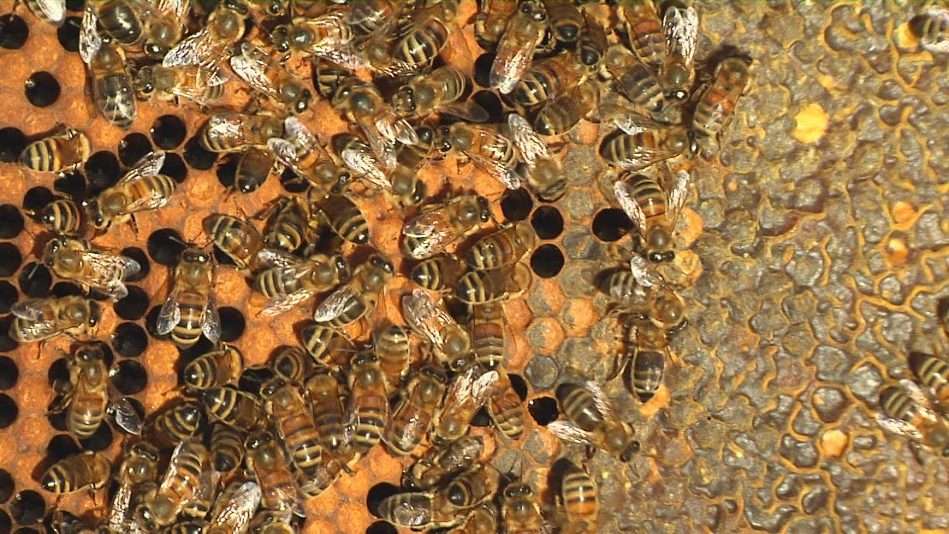 There could be thousands of bees in one hive.