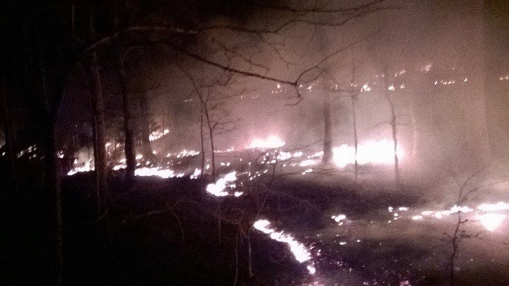 This photo sent by Land Between the Lakes shows a wildfire at the park on Sunday, Feb. 28, 2016.